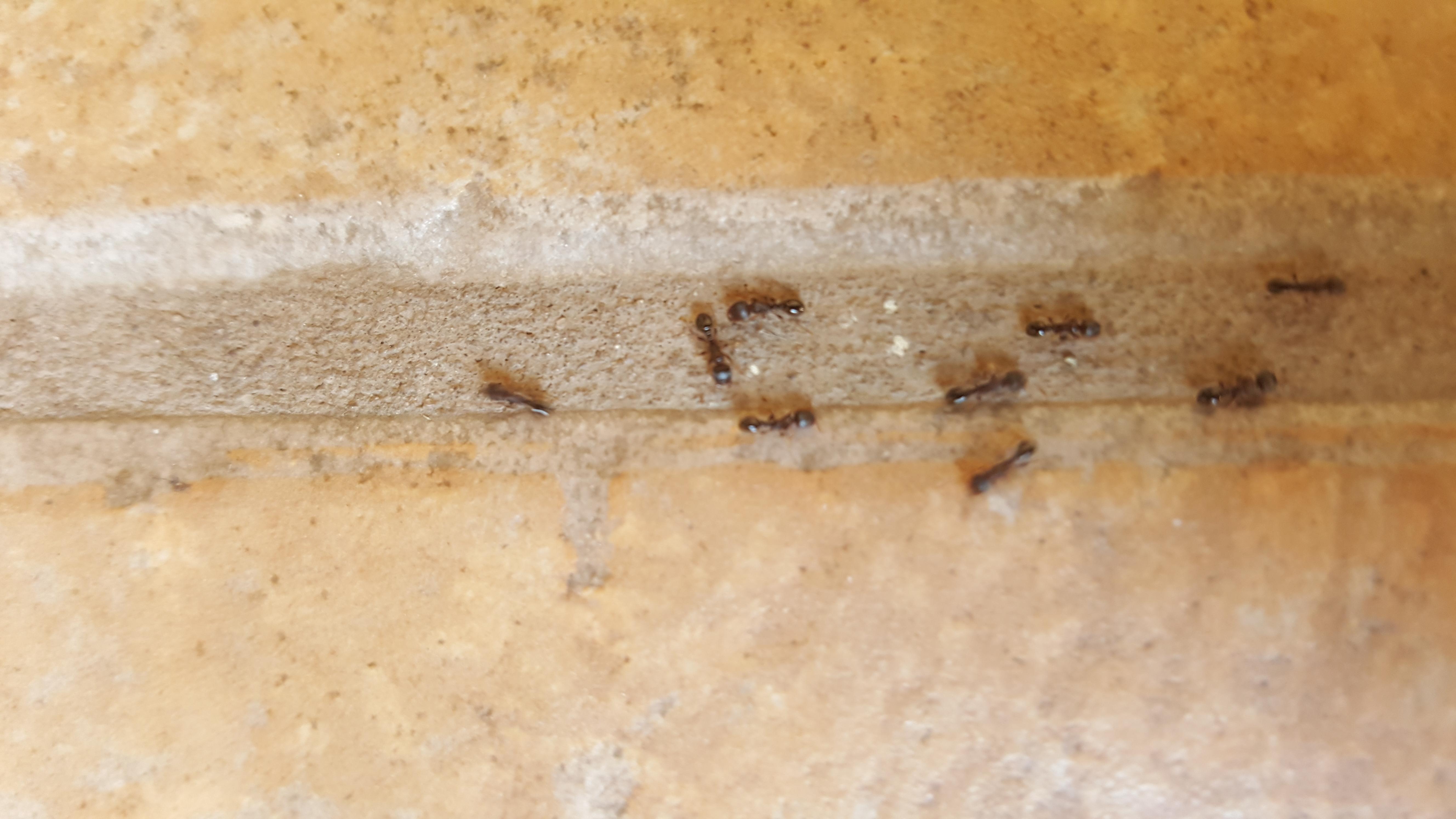 eastside pest control - exterminators local qualified experienced
