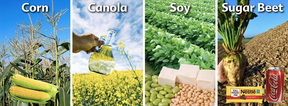 genetically modified crops Genetically modified crops and food 2 introduction the debate about the safety and need for genetically modified (gm) crops and foods has raged since the mid '90s.